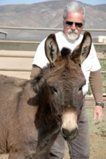 BLM Asks Drivers to Watch Out for Nevada's Red Rock Burros