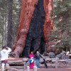 Restoration of Yosemite's Mariposa Grove of Giant Sequoias Moves Closer