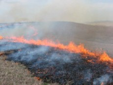 Fall Prescribed Fire and Bison Bring Changes to the Preserve